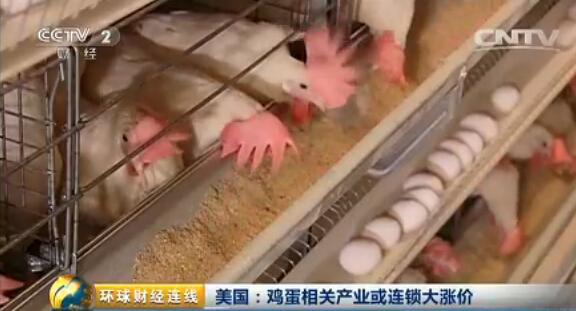 禽流感疫情蔓延 美国鸡蛋价格暴涨3倍