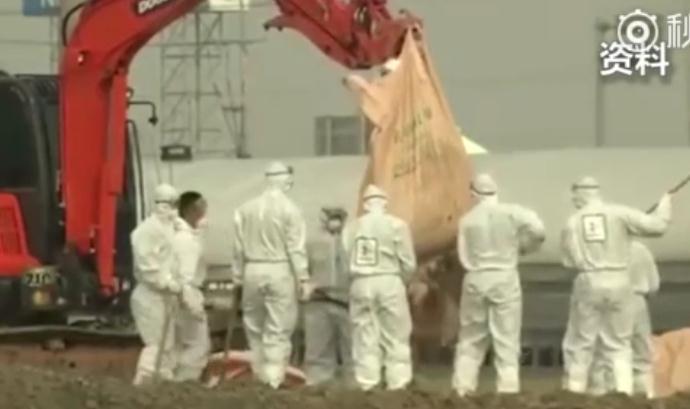 禽流感又来了!韩国紧急扑杀20万只家禽