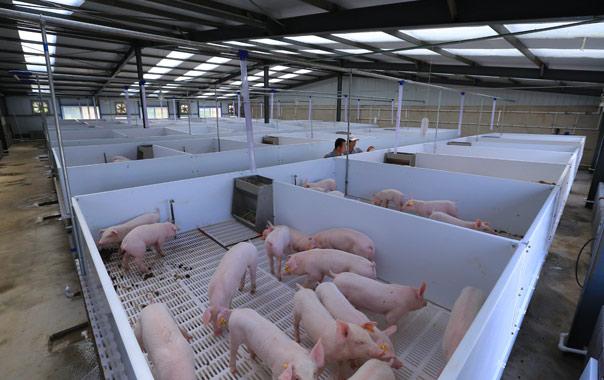 iPhone X面部识别技术算什么?养殖场的面部识别才叫牛!
