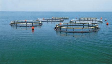 研究:水产的饲料转化率并没有想象的那么高