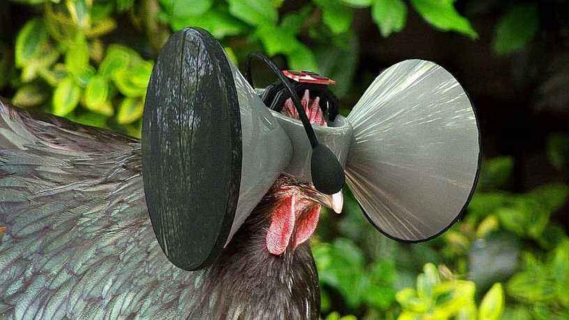 进入家禽行业的九大颠覆性技术 总有一个你没想到