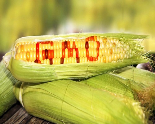 欧盟被迫重新审核2015年允许进口转基因大豆的决定