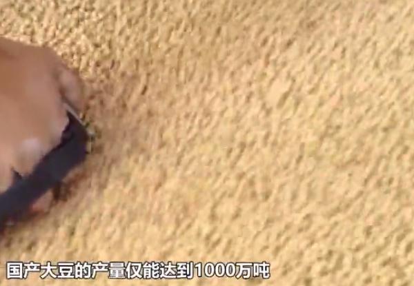 科普|为什么中国要大量进口美国大豆?