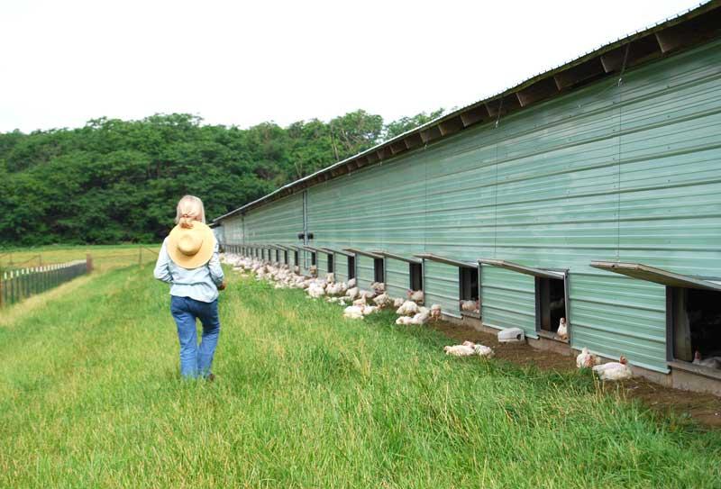 泰森食品收购有机鸡肉生产商