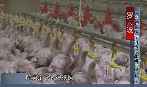 专家解读: 食用白羽肉鸡是否安全?