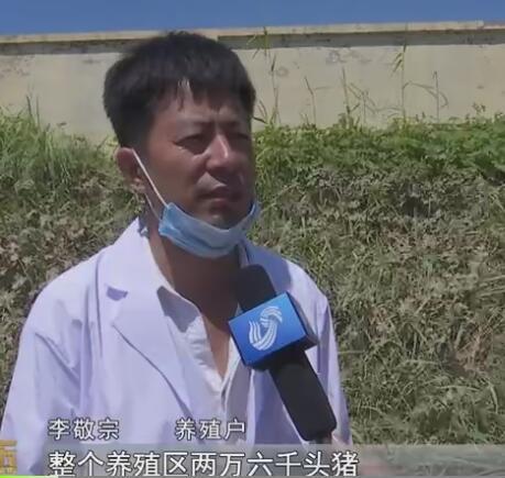 山东寿光洪水淹没致2万多头生猪死亡