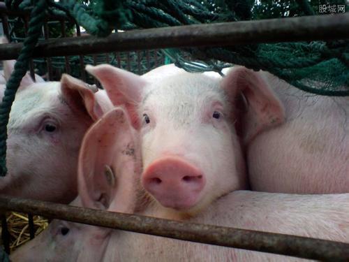 安徽省铜陵市义安区发生一起非洲猪瘟疫情