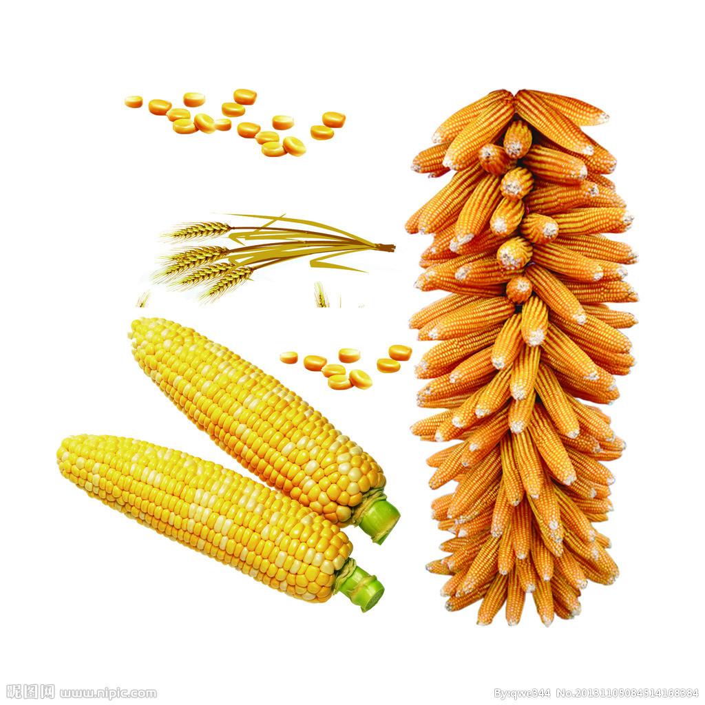 拜耳:明年农业部门业绩难预测 不排除从中美贸易战中受益可能