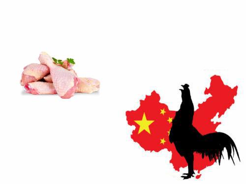 波兰最大禽肉加工企业开始对华出口
