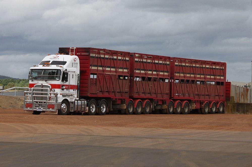 国际组织和欧美关于动物调运的要求