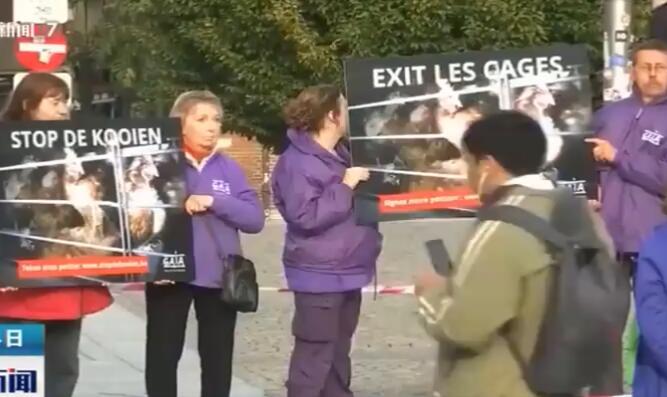 比利时动保组织呼吁禁止使用笼子饲养家禽家畜