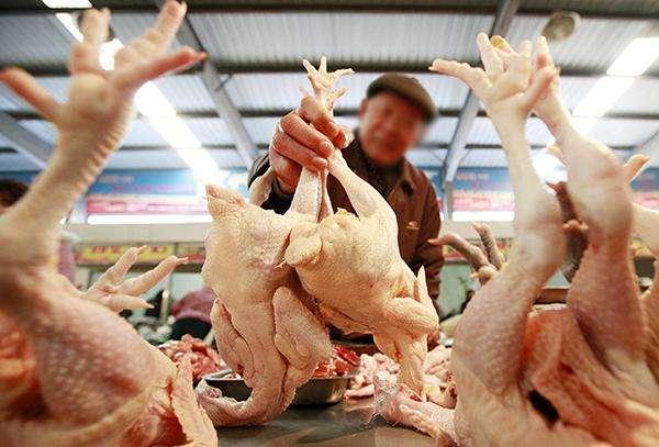 白羽肉鸡市场超预期