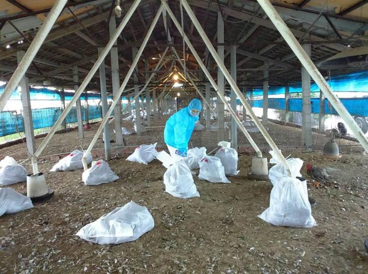 台北市家禽批发市场 发现禽流感鸡只