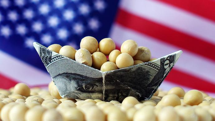 美对华出口大幅下滑 大豆行业受重创