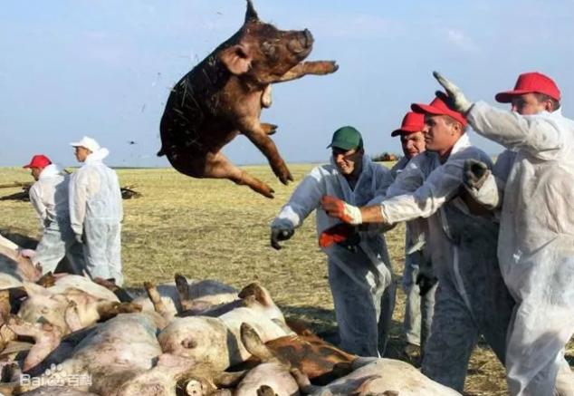 乌克兰东部发生一起非洲猪瘟疫情
