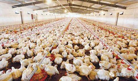 肉鸡行业兼并加速 益生股份2.7亿元收购益春种禽100%股权及春雪食品的8个种鸡场
