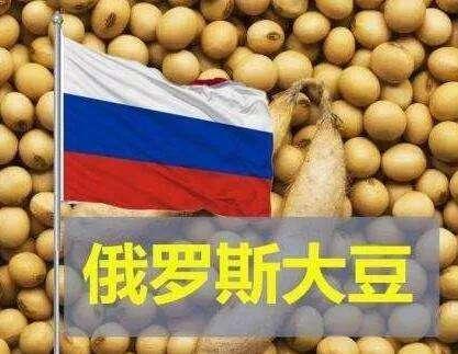 中俄合作落地 数千吨俄罗斯大豆抵华