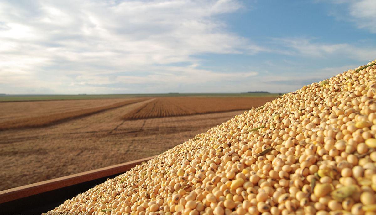 美大豆价格已下跌近10%
