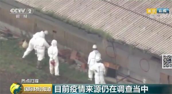 韩国发现首例非洲猪瘟疫情!拟今日扑杀3950头猪