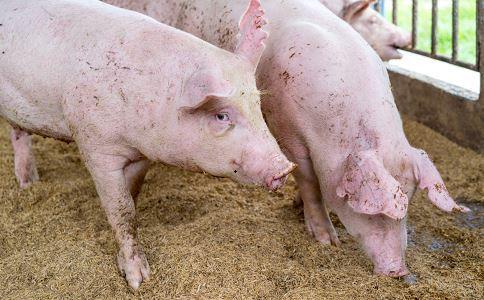 10月能繁母猪存栏环比增0.6%
