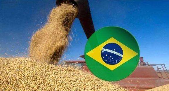 世界第一大豆出口国巴西有信心维持对华大豆出口