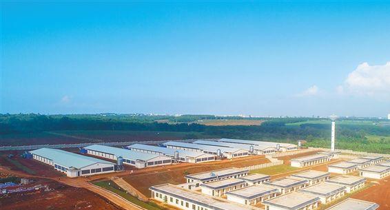 海垦草畜集团推进300万只蛋鸡全产业链项目
