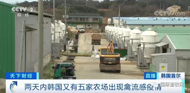 韩国超千万只家禽被扑杀 鸭肉涨价近7成