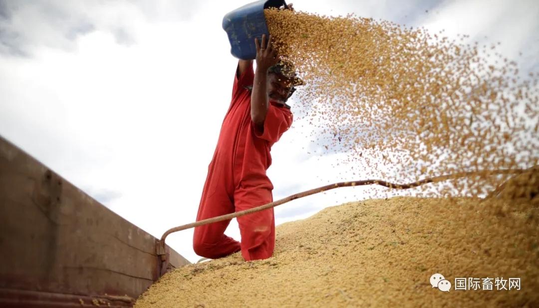 中国大豆进口预计放慢,因豆粕消费有限