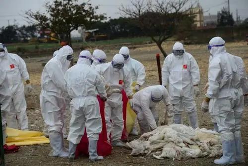 多哥发生高致病性禽流感疫情
