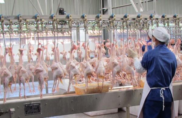 集美禽業工作室7月6日