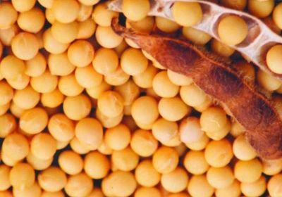 大豆磷脂在动物饲料中的应用
