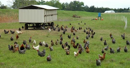 美国农业生产及家庭农场模式 -国际畜牧网